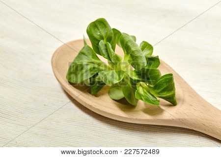 Fresh Leaf Lettuce Corn On Background. Close Up View.