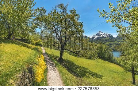 Trail Through An Orchard In The Alps Mountains - Spring Scenery With A Hiking Trail Through An Orcha