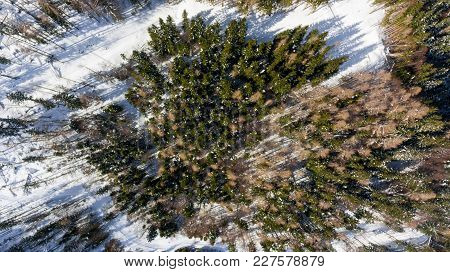 Drop Down View Of Winter Forest. Aerial View Of Snow Covered Trees.
