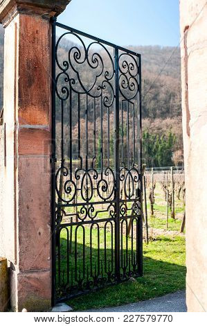 Metal Ancient Gate. Chateau Historical Wine Region, Vineyards Plantation In Alsace, France, Europe.