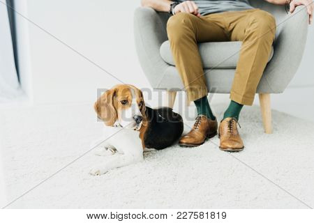 Cropped Image Of Man Sitting On Armchair And Dog Lying On Floor
