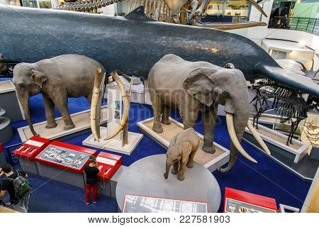 London, Great Britain - May 22, 2014: This Is A Fragment Of The Exhibition In The Hall Of Mammals In
