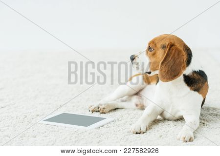Dog Lying On Carpet With Tablet At Home