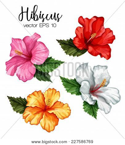 Hibiscus Flower Set. Red White Pink Yellow Blooming Blossom With Green Leaves. Realistic Detailed Ha