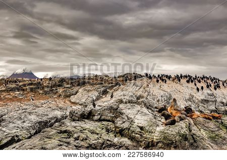 Sea Lions And Cormorants On A Rock In The Beagle Channel, Argentina