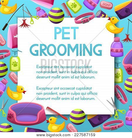 Pet Shop Sale Square Vector Banner With Shadow, Poster Design On Colorful Background With Animal Gro