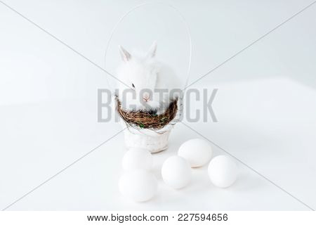 Adorable White Rabbit On Nest In Basket And Chicken Eggs On White