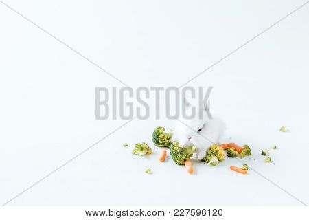 Close-up View Of Fresh Vegetables And Cute Furry Rabbit On White