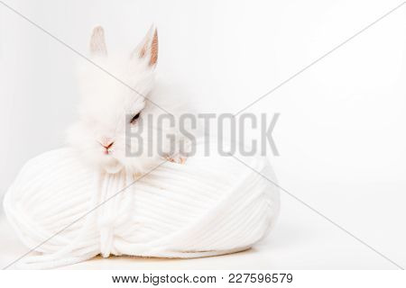 Close-up View Of Adorable Furry Rabbit And Ball Of Yarn Isolated On White