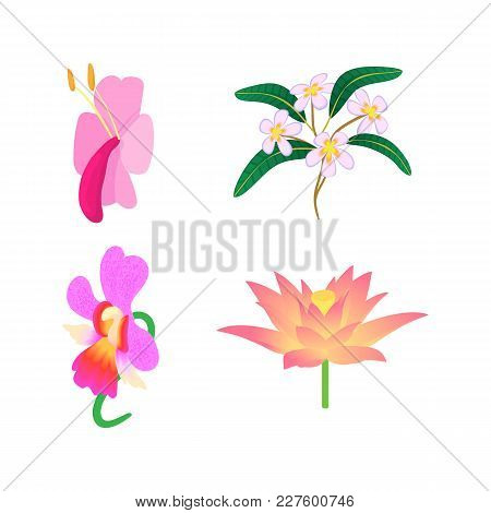 Exotic Flower Icon Set. Cartoon Set Of Exotic Flower Vector Icons For Web Design Isolated On White B