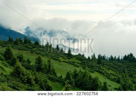 Picturesque summer landscape in foggy day in Carpathian mountains. Lush green forest from pine tree on backgound. Travel background concept