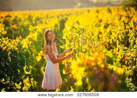 Smiling Elegant Woman In Nature.joy And Happiness.serene Female In Wine Grape Field In Sunset.wine G