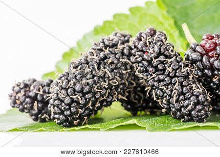 Close Up Mulberry Fruit With Green Leaf
