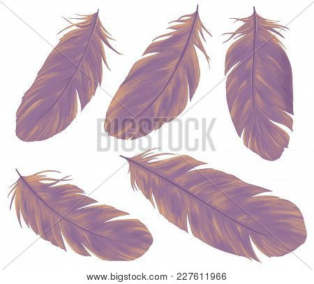 Feathers Hand Drawn Set. Element Of Boho Style Design. Bird Quill Isolated On White Background.