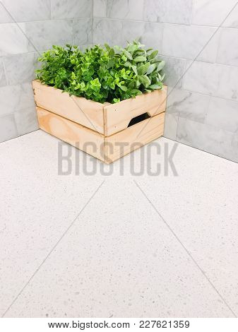Green Plant In A Wooden Box In The Corner Of A Kitchen Countertop. Space For Text.