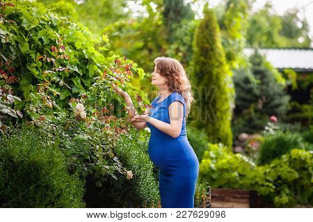 Beautiful Young Pregnant Woman Is Standing In The Summer Near A Blooming Garden And Sniffing A Rose