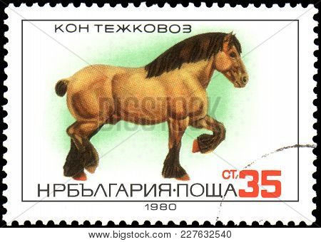 Bulgaria - Circa 1980: A Postage Stamp, Printed In Bulgaria, Shows A Heavy Horse