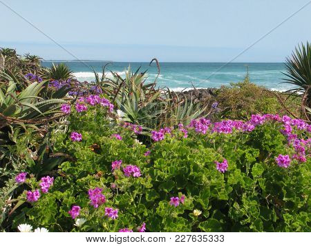 Flowers And Other Vegetation In The Fore Ground, With The Sea In The Back Ground