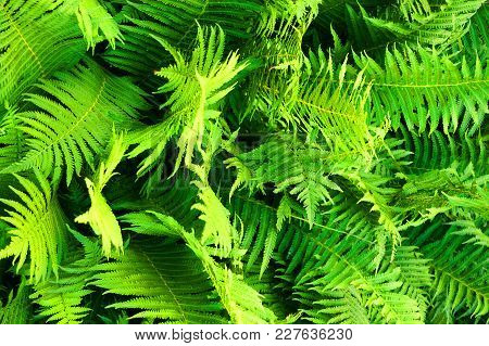 Green Fern Plant Texture