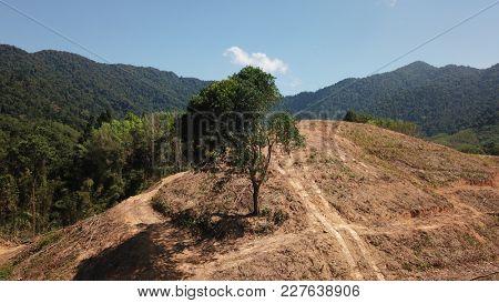 Deforestation. Logging of forest. Environmental destruction - rainforest destroyed to male way for oil palm plantation