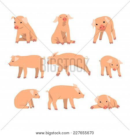 Cute Little Pig Set, Funny Piggy In Different Actions Set Of Cartoon Vector Illustrations Isolated O