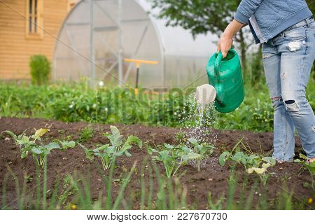 Woman Watering Plants In Garden. Girl With Green Watering Can. Gardening And Agriculture Concept.