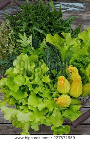 Fresh Lettuce Leaves Ripped From The Garden. Juicy Green Salad. Summer. Flowers Of Zucchini, Arugula