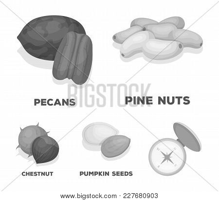 Pecan, Pine Nut, Pumpkin Seeds, Chestnut.different Kinds Of Nuts Set Collection Icons In Monochrome