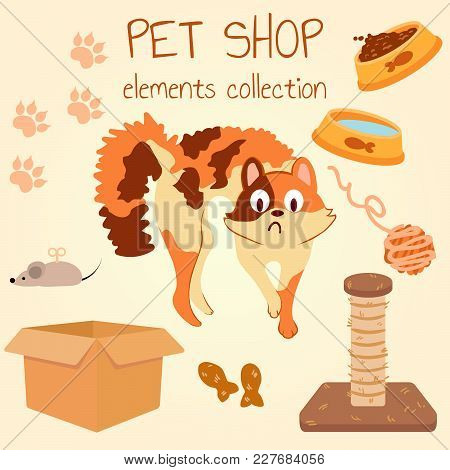 Multicolored Cat Scared. Pet Shop Poster Design With Many Accessories. Vector Illustration.