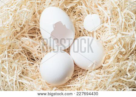 White Eggs, Eggshell On Wood Wool Nest, Natural Raffia Background