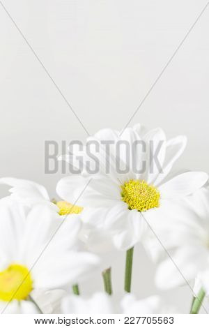 Bunch Of White Daisy Flowers  On Bright  Background Closeup. Spring Daisy Flowers Wall Paper.