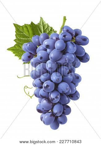 Bunch Of Blue Grapes With Leaves Isolated On White Background For Package Design