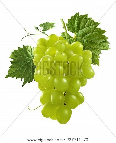 Bunch Of Green Grapes Isolated On White Background As Package Design Element