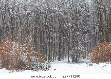 Winter landscape of the frozen forest, in Transylvania
