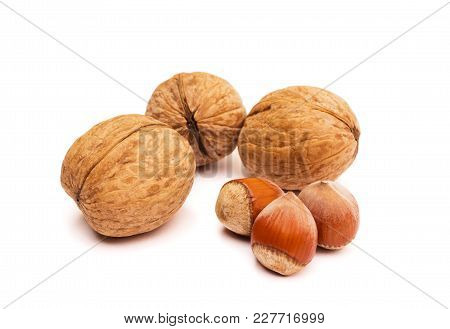 Group Of Walnuts And Hazelnuts On White. Healthy Food Concept.