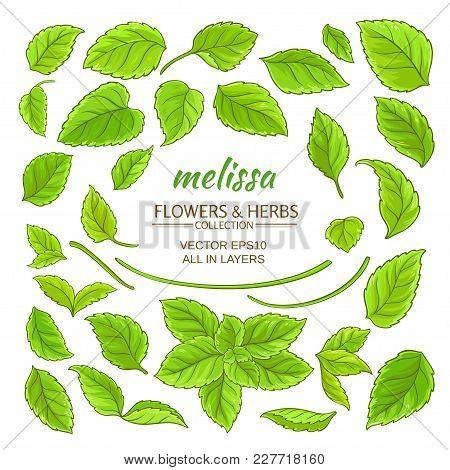 Melissa Plant Elements Set On White Background