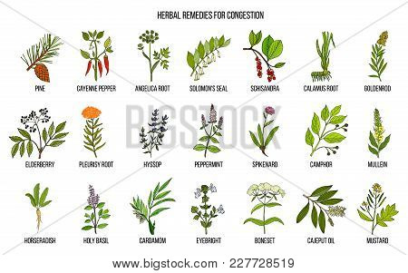 Collection Of Natural Herbs For Congestion. Hand Drawn Botanical Vector Set Of Medicinal Plants