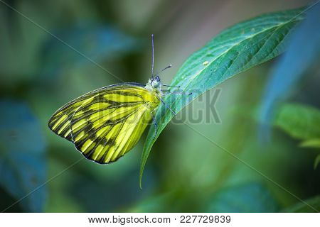 Butterflies Are Insects In The Garden Which Gets Attracted For Nectar....