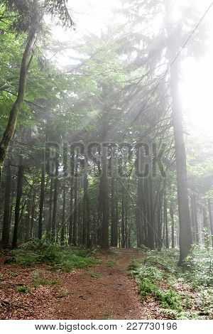 Bright Morning In The Forest - Sunbeams