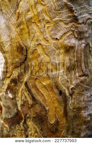 Texture Of A Tree Eaten By Worms