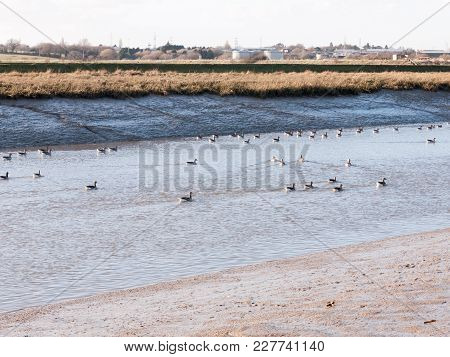 Stream River Landscape View Blue Water Coast Essex Estuary With Geese