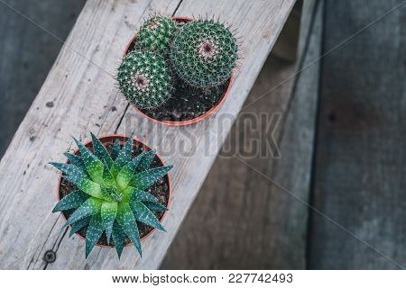 Green Cacti On Rustic Wooden Background. Toned Vintage. Flat Lay