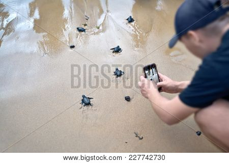 Group Of Little Sea Turtles Are Running To The Sea On The Sand Beach On Sri Lanka. Man In A Dark Bas