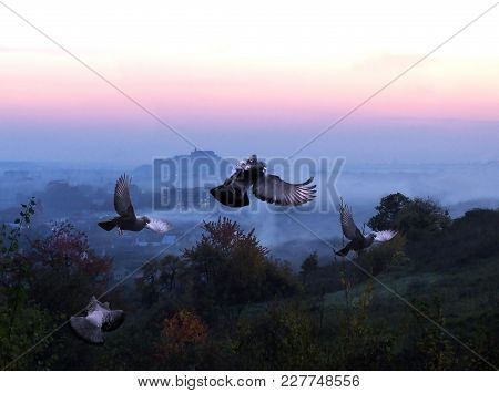 Pigeons Fly Over The City