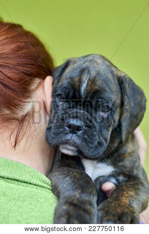 Brindle With White Spots Boxer Puppy Lies On Redhead Woman Shoulder On Green Background
