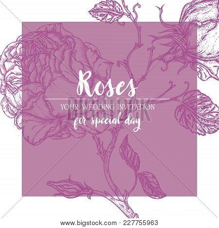 Wedding Marriage Invitation. Rose Flower Engraving Vector Illustration. Scratch Board Style Imitatio
