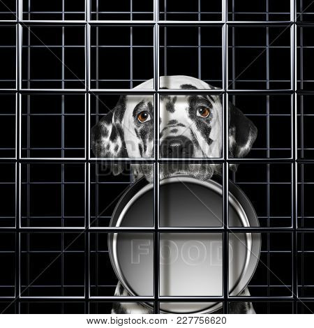 Hungry Dalmatian Dog With Empty Bowl Is Punishe In Cage Of Prison