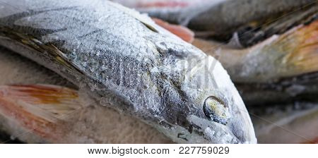 The Fish Perch frozen object.