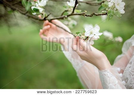 Beautiful Girl Hands With A Branch Of A Blossoming Apple Tree.