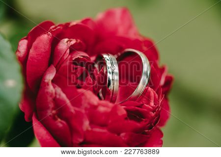 Two Wedding Rings On Red Rose Background